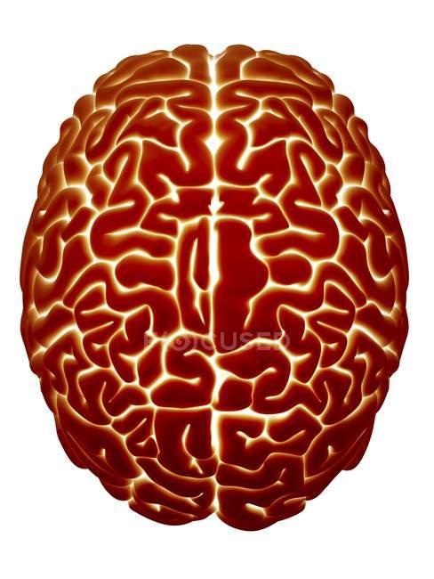 Anatomia del cervello umano — Foto stock
