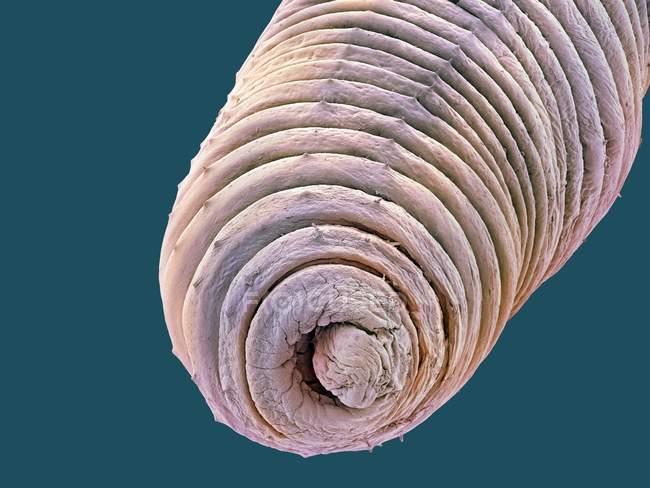 Micrografo elettronico a scansione colorata di lombrichi — Foto stock