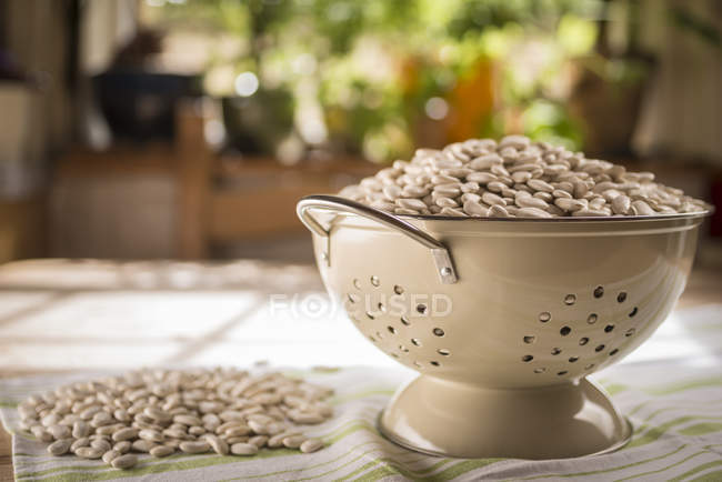 Tarbais beans in a colander, still life. — Stock Photo