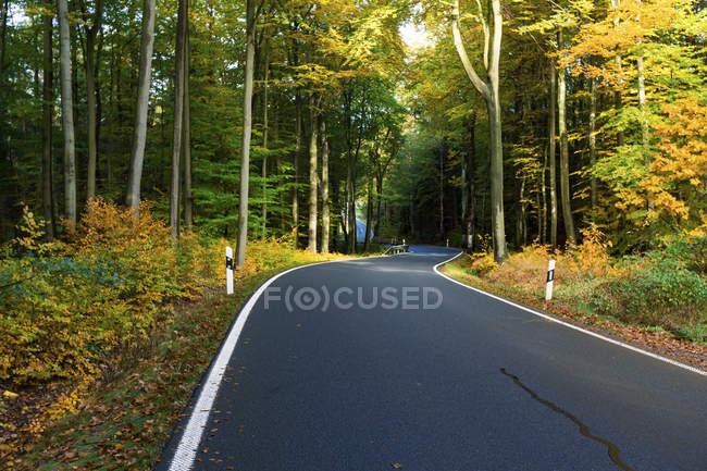 Дорога через лес осенью . — стоковое фото