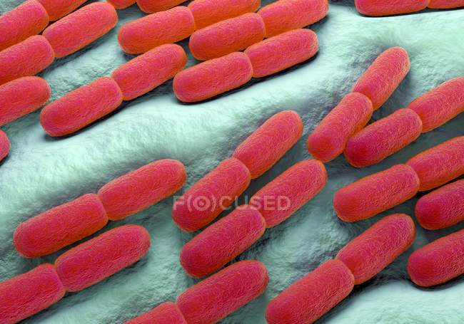 Lactobacillus bulgaricus bacteria — Stock Photo