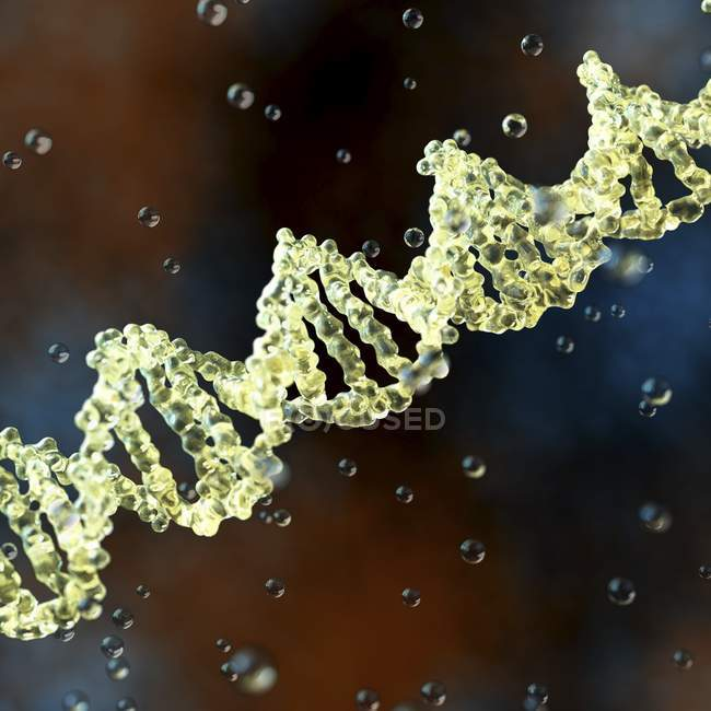 Estructura de la molécula de ADN - foto de stock