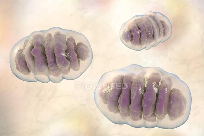 Мітохондрії органелли структури, комп'ютер ілюстрація — стокове фото