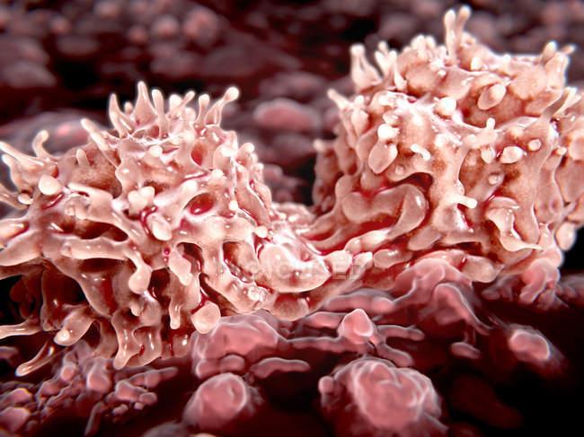 Деления стволовых клеток — стоковое фото