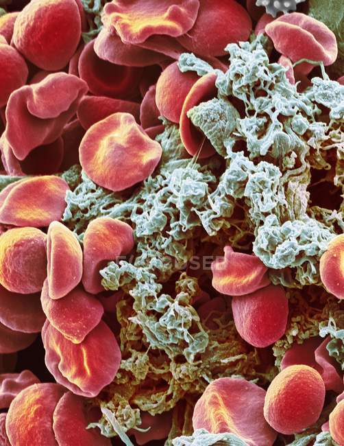 Red blood cells and platelets — Stock Photo