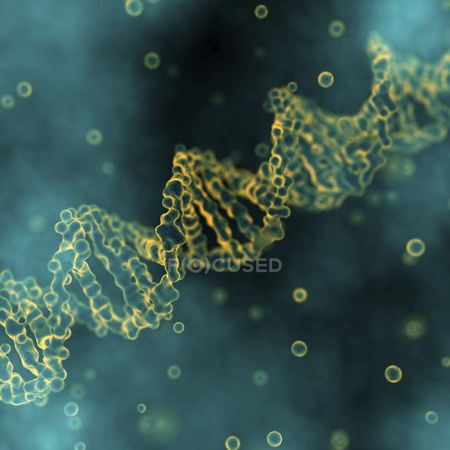 DNA molecule structure — Stock Photo
