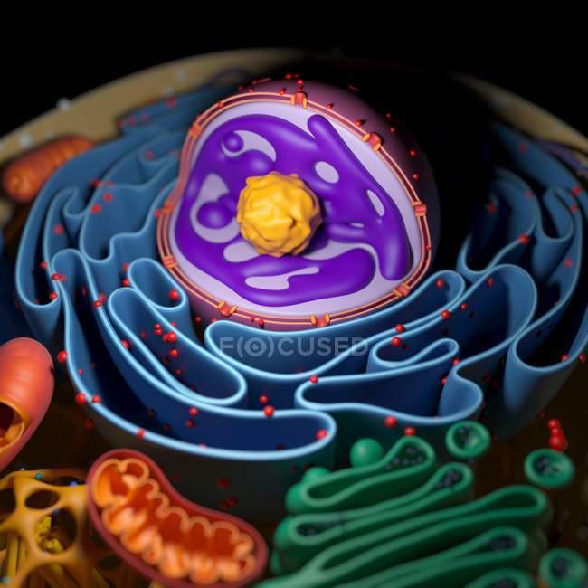 Структура клеточных органелл — стоковое фото