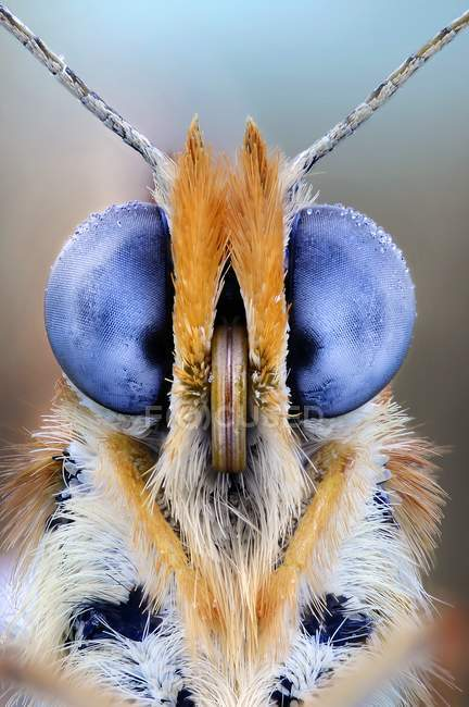 Butterfly compound eyes — Stock Photo