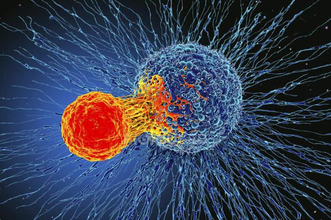 Cellula tumorale attaccata da cellule T — Foto stock