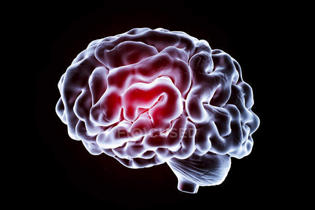 Visual rendering of Human brain — Stock Photo