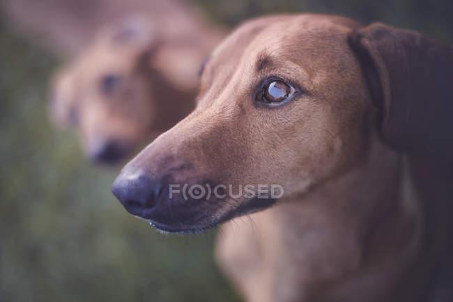 Close-up portrait of dog muzzle looking away. — Fotografia de Stock