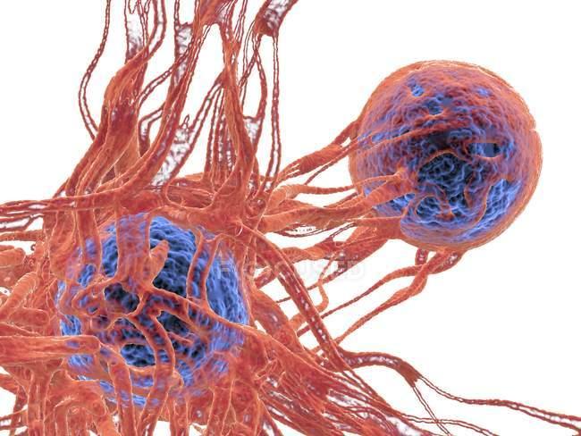 Ракові клітини і кровоносних судин — стокове фото