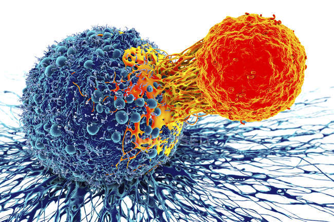 Cancer cell with T-cell, — Stock Photo