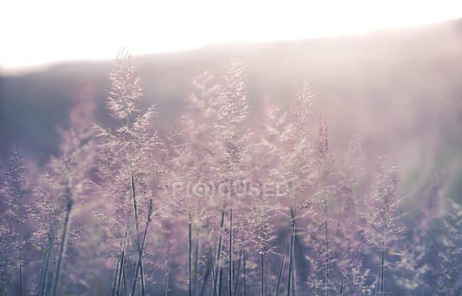 Prato di erba selvatica in luce solare morbida — Foto stock
