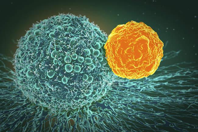 Cellule cancéreuse attaquée par les lymphocytes T — Photo de stock