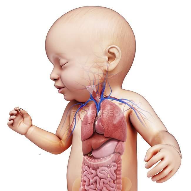 Órganos del cuerpo recién nacidos - foto de stock