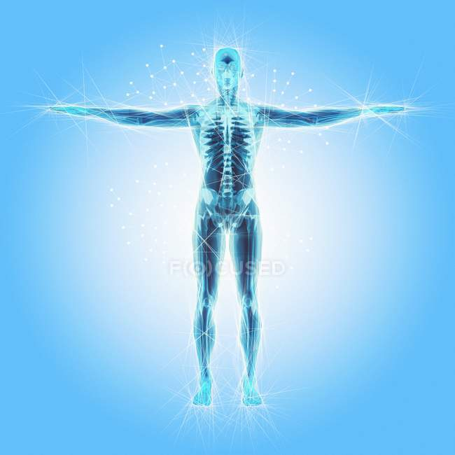 Atomic Structure Of The Human Body Stock Photo 170016654