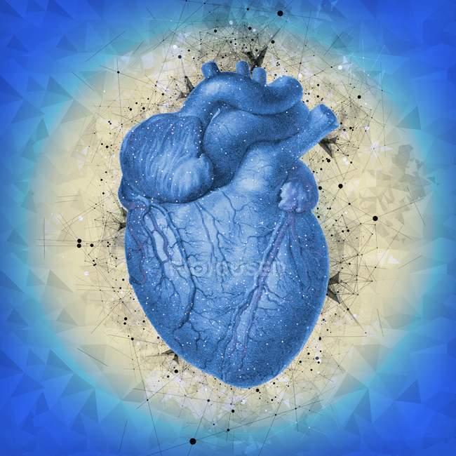 Anatomia del cuore umano normale — Foto stock