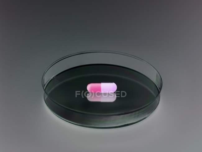 Pilule en boîte de Pétri sur fond gris . — Photo de stock