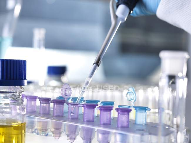 Pipetting samples into microcentrifuge tubes — Stock Photo