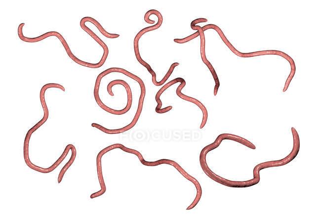 Дорослі threadworms, комп'ютер ілюстрація — стокове фото