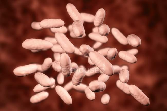 Aggregatibacter aphrophilus bacteria, ilustración por ordenador . - foto de stock
