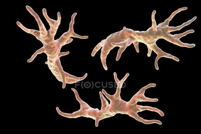 Balamuthia mandrillaris амеба, компьютер иллюстрации. — стоковое фото