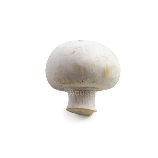 Close-up view of mushroom on white background. — Stock Photo