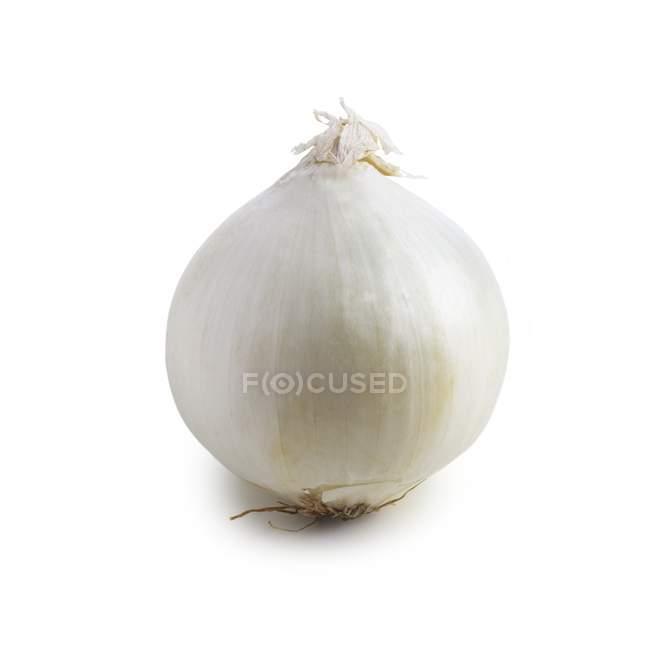 Vista do close-up de cebola no fundo branco. — Fotografia de Stock