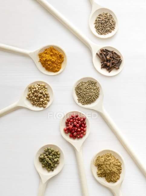 Especias secas en cucharas blancas, plano de estudio . - foto de stock