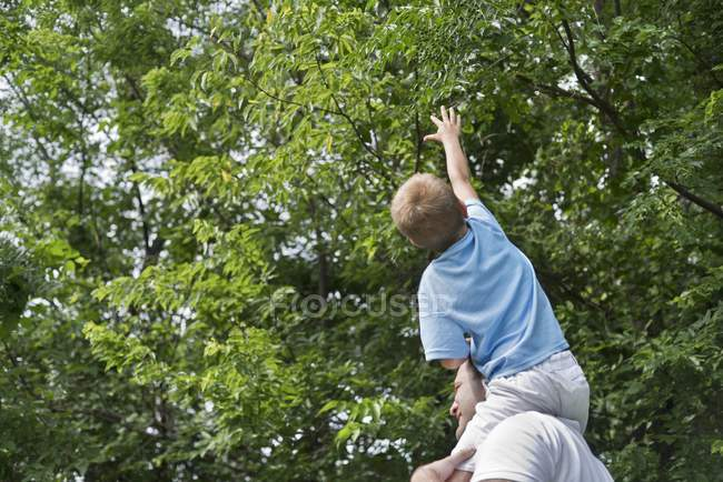 Father carrying son on shoulders and boy reaching trees. — Stock Photo