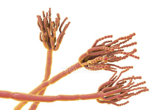 Цифровая Иллюстрация гриба penicillium. — стоковое фото