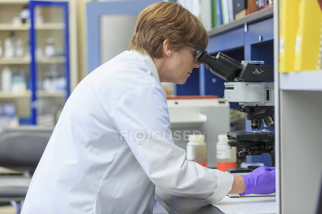 Chemist examining sample slide on microscope. — Stock Photo