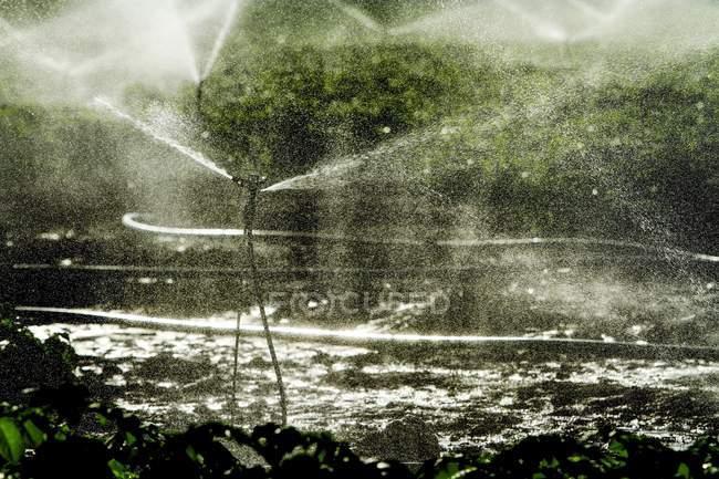 Sprinklers splashing water in field. — Stock Photo