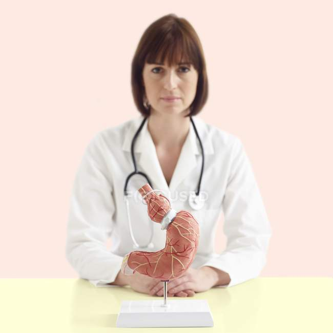 Doctor with medical model of human stomach with gastric band. — Stock Photo
