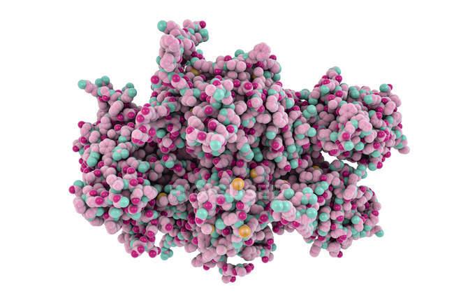 Ilustración digital de la proteína del factor de coagulación . - foto de stock