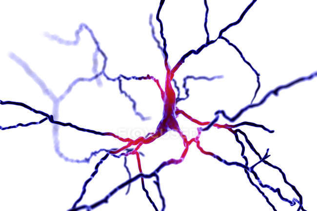 Dopaminergic neuron brain cells, digital illustration. — Stockfoto