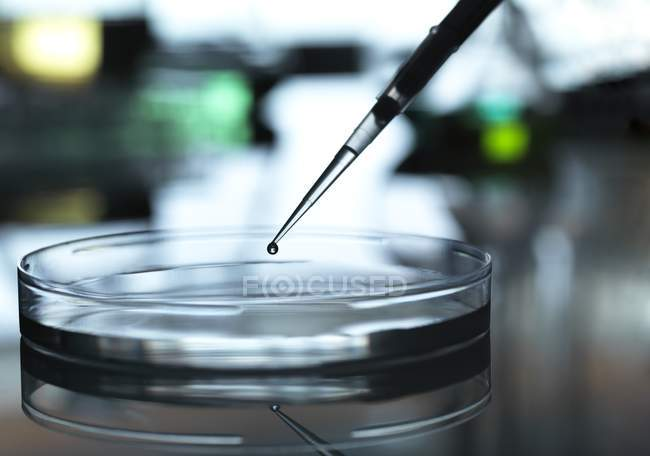 Pipette adding sample to petri dish during experiment in laboratory. — Stock Photo
