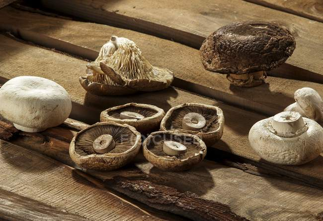Diferentes tipos de setas comestibles cultivadas sobre fondo de madera. - foto de stock