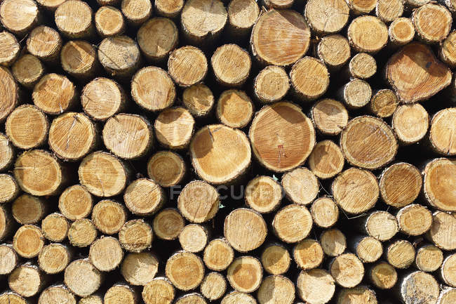Cut tree trunks stacked outdoors, full frame. — Stock Photo