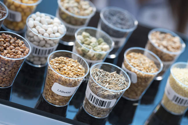 Seeds and cereals in food safety laboratory. — Stock Photo