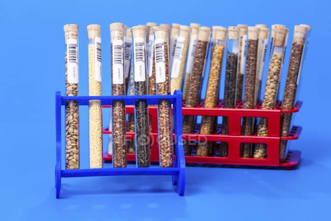 Racks of food samples in test tubes. — Stock Photo