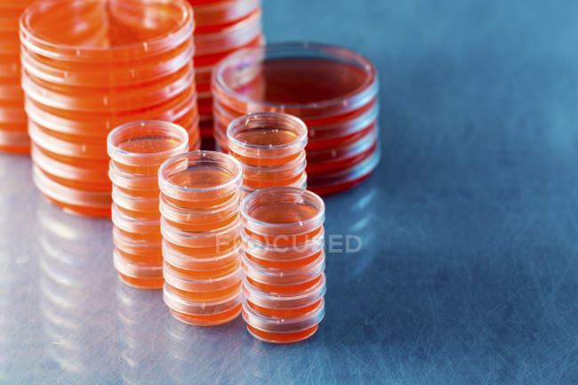 Stacked agar plates with microbiological cultures on plain background. — Stock Photo