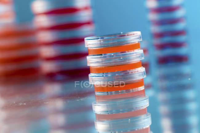 Gestapelte Agarplatten mit mikrobiologischen Kulturen auf einfarbigen Hintergrund. — Stockfoto