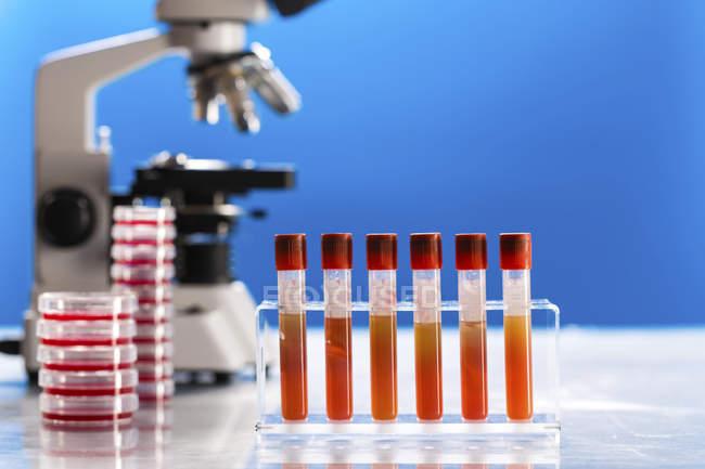 Пробирки и чашки Петри в патогенной лаборатории . — стоковое фото