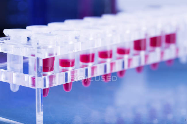 Blood samples for testing in microcentrifuge tubes. — Stock Photo