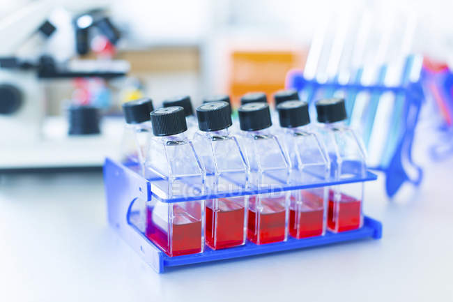 Close-up of rack of cell cultures in bottles in laboratory. — Stock Photo
