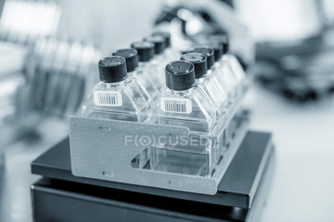 Stem cell cultures on weighed in laboratory. — Stock Photo