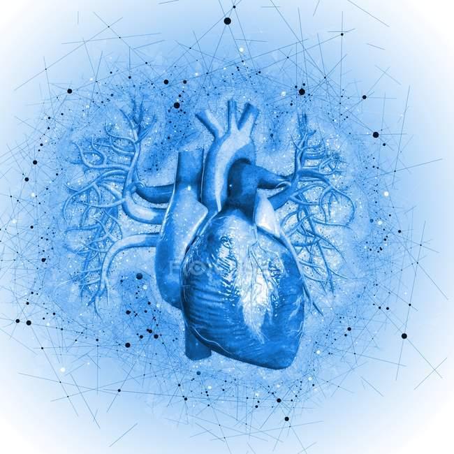 Menschlichen Herzens vor blauem Hintergrund, Abbildung — Stockfoto ...