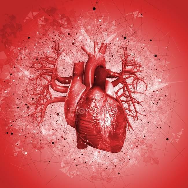 Corazón humano sobre fondo rojo, ilustración . - foto de stock